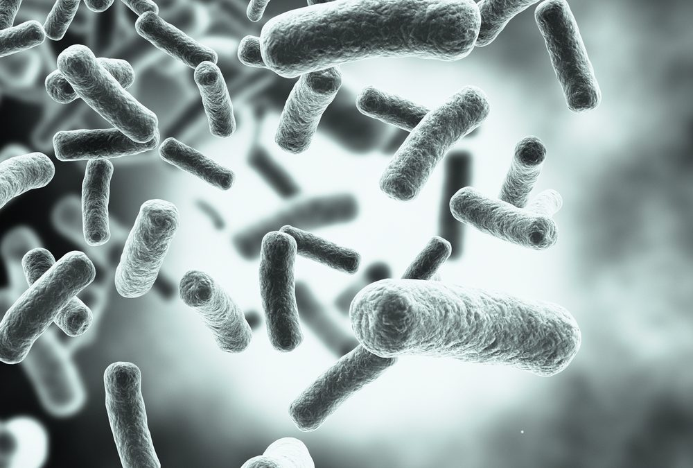 10 Fast Facts About Bacteria